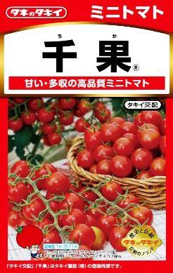 『 家庭菜園に向くトマトの品種を調べてみた 』 家庭菜園,トマト,品種,レッドオーレ,中玉とまと,..ミニ:千果(ちか)..