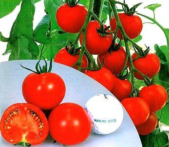 『 家庭菜園に向くトマトの品種を調べてみた 』 家庭菜園,トマト,品種,レッドオーレ,中玉とまと,..中玉:レッドオーレ..