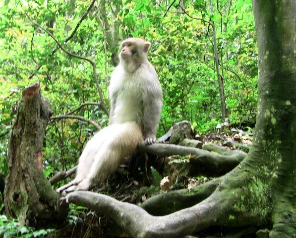 『 中国.張家界から武陵源に行ってみた 』 ..でも張家界の猿はちょっと違ってスタイリストです。..