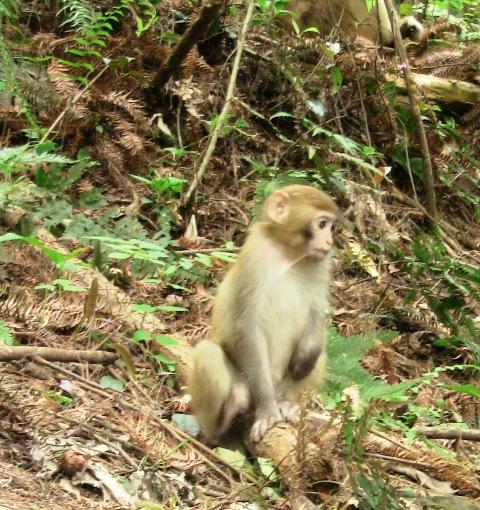 『 中国.張家界から武陵源に行ってみた 』 ..親猿がじっと子ザルを見守っていますが、判りますでしょうか?画像の右上です。..