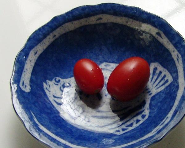 『 ミニ トマト『アイコ』を種から栽培する記録 』 について、種から育てた記録を書き記しています。..初めての収穫です。..