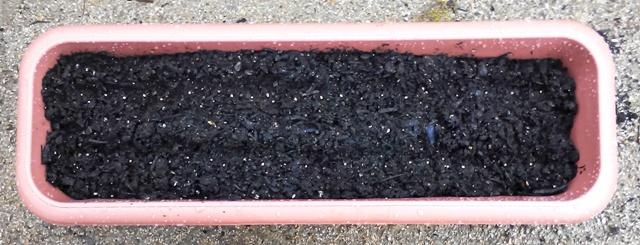 『 20日大根(ラディッシュ)をプランターや水耕栽培で育てる日記 』 ..合計45粒程で、間引きして20株ほどというところでしょうか?予測では5月10日、収穫ということですがどのようになるのでしょうか?..