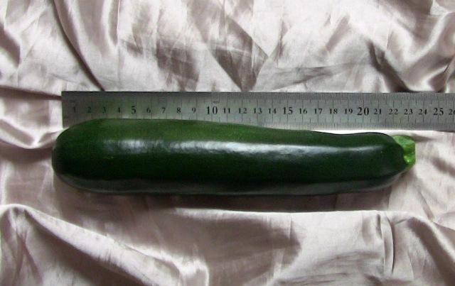 『 始めてズッキーニを種から栽培してみました 』 ..ズッキーニを収穫しました。ちょっとデカ過ぎ?長さ22cm 直径5cmありました。..