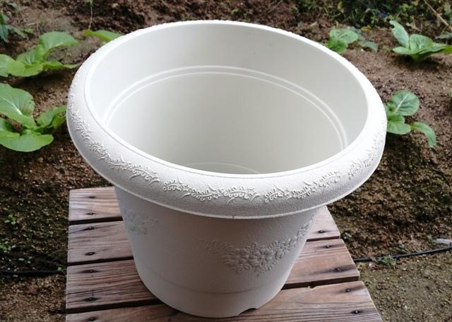 『 釈迦頭(シャカトウ-バンレイシ)栽培-種から育てる記録 』 ..1号が約3センチということですので、直径30cmの10号鉢を購入です。..