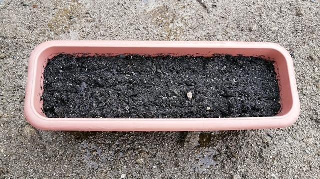 『 あさつき(浅葱)栽培-プランターに植え替えてみた 』 は春と秋に収穫でき、切りとってもすぐに新しい芽が伸びてきます。..培養土で覆ってオシマイです。..