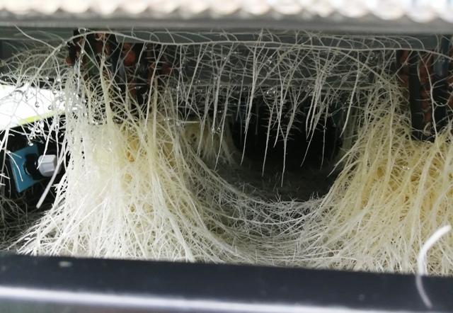 『 メロン栽培は難しい?水耕栽培でメロンを育てる記録 』 ..根っこの方は?と覗くと…..