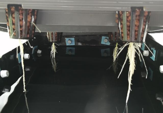 『 メロン栽培は難しい?水耕栽培でメロンを育てる記録 』 ..地上部の変化は左程感じませんが根っこの方は変化しています。..